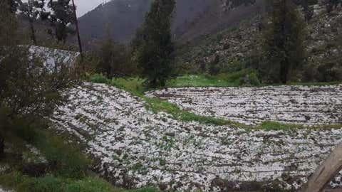 Jammu's farmers distraught as unseasonal hailstorms destroy crops (IANS)