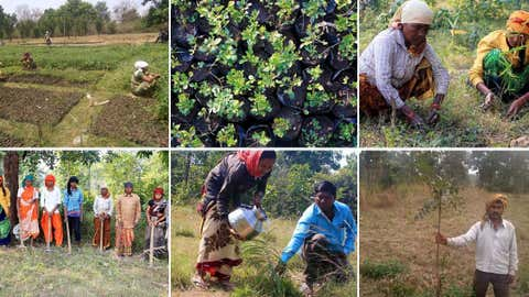 Plantation of trees with the help of the local communities in Kahna Pench corridor. (Grow Trees.com)