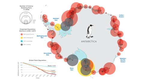 Emperor penguins live in the icy coastal regions of Antarctica, but current climate models project significant declines in Antarctic Sea ice to which the emperor penguins' life cycle is closely tied. (Natalie Renier /©Woods Hole Oceanographic Institution)