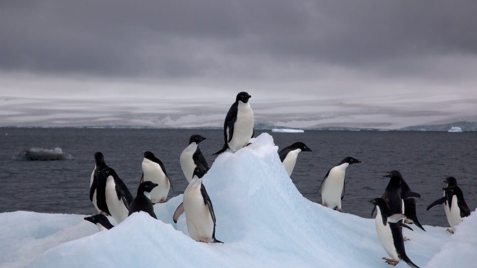 Ice Loss in Antarctica Has Accelerated at Alarming Rate: Study
