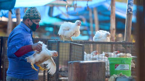 Poultry seller takes additional precautions as bird flu scare hits the sale of chicken in Panchkula, Haryana. (Nitin Sharma/BCCL Chandigarh)
