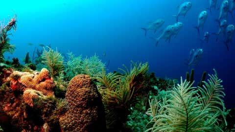 Coral reef ecosystem. (NOAA)