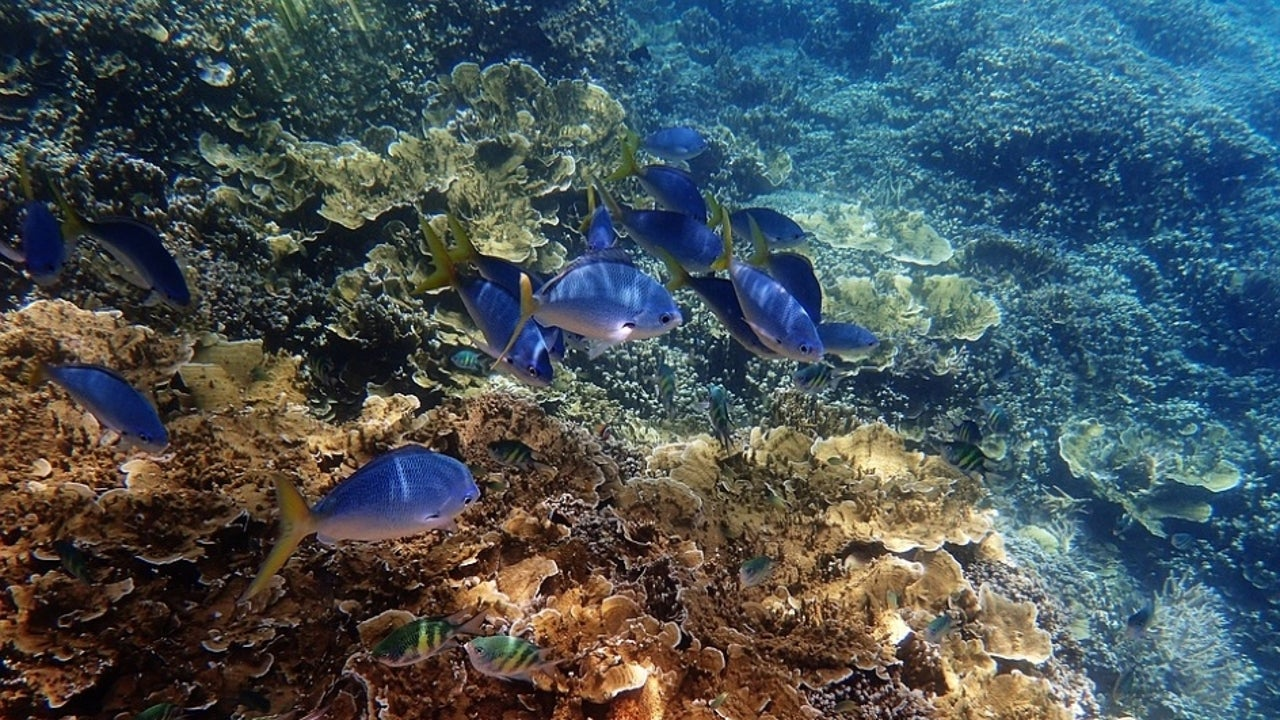 For the first time, severe bleaching has struck all three regions of the Great Barrier Reef—the northern, central and now large parts of the southern sectors.