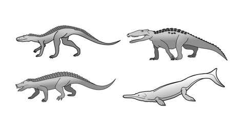 The crocodiles have had a much greater diversity of forms in the past. Examples include fast runners, digging and burrowing forms, herbivores, and ocean-going species.