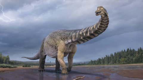 Australia's largest dinosaur. (Vlad Konstantinov)