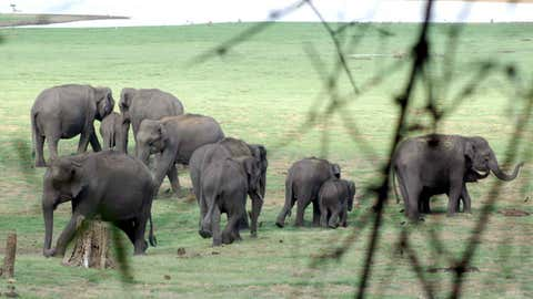 A herd of elephants. (Chethan Shivakumar/BCCL Bengaluru)