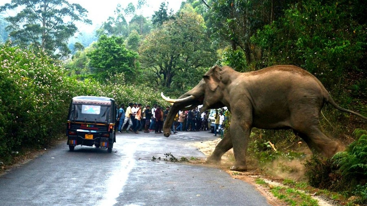Threats to the Asian elephant include habitat loss and fragmentation, poisoning, poaching, illegal trade, and obstacles to migration such as railways.