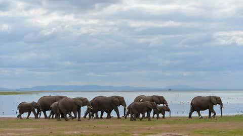 Elephants (IANS)