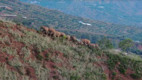 An aerial photo taken on June 20, 2021, shows the Asian elephants in Dalongtan Township of Eshan County, Yuxi City of southwest China's Yunnan Province. (Xinhua/IANS)