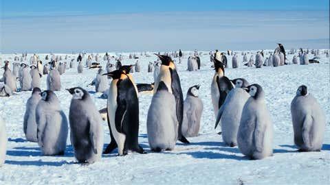 Emperor Penguins in Antarctica. (Michael Van Woert, NOAA NESDIS, ORA)