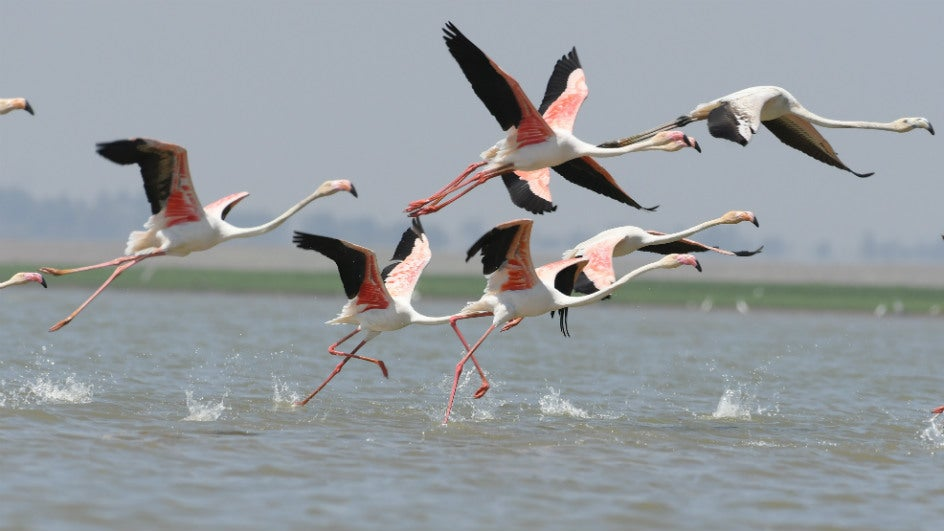 These 5 Winged Visitors Liven up India's Winters