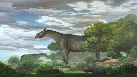 Ecological reconstruction of giant rhinos and their accompanying fauna in the Linxia Basin during the Oligocene. (Chen Yu)