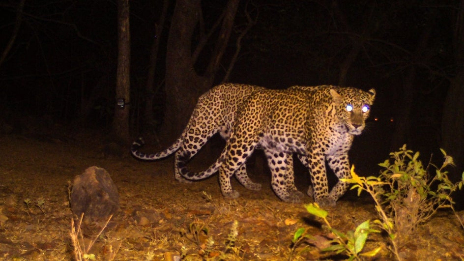 Stealthy Shopper: Leopard Sneaks into Mall near Mumbai