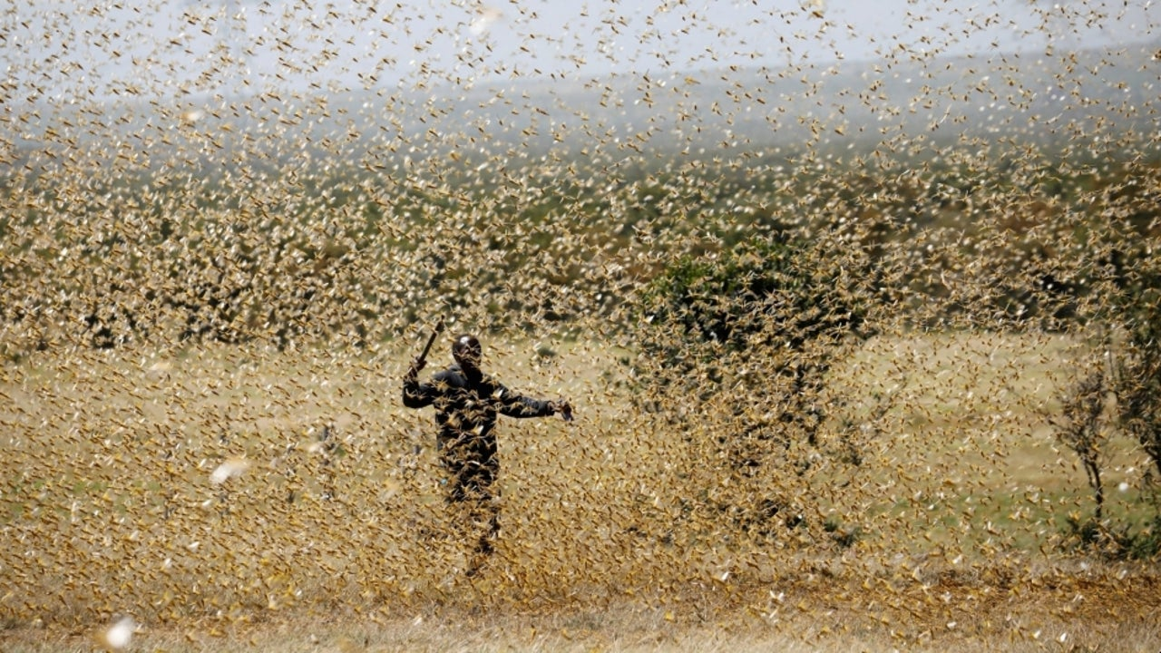 locust attack: several districts in uttar pradesh put on alert; drones to  help control swarms   the weather channel - articles from the weather  channel   weather.com