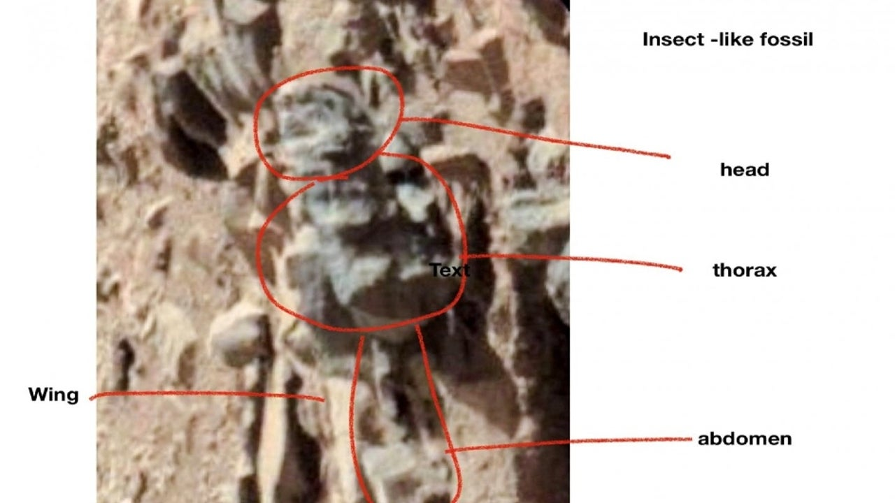 Courtesy photographs from various Mars rovers, Professor Emeritus William Romoser's research claims to have found numerous examples of insect-like forms.