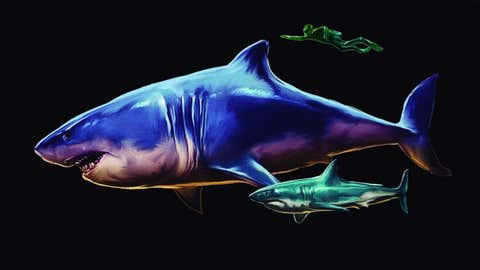 A megalodon shark and its baby compared to a human being. (Guillermo Torres. Banco de Imágenes Ambientales (BIA), Instituto Alexander von Humboldt.)