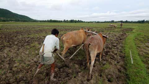 File photo: A farmer tills his paddy field at Bamuni village, in Nagaon of Assam. (IANS)