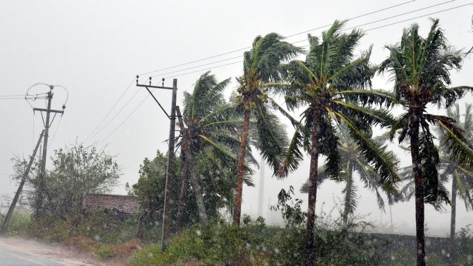 Cyclonic Phethai 'Shower' Fish on Andhra's Amalapuram