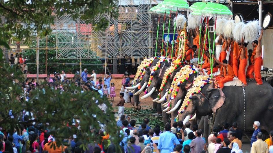 Image result for Famed Kerala Temple Festival Faces 'Elephantine' Problem