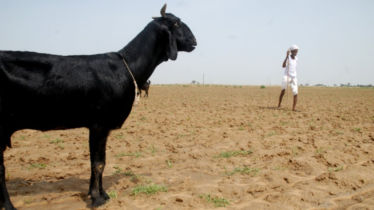 632 out of 958 severely affected villages are located in Jaisalmer.