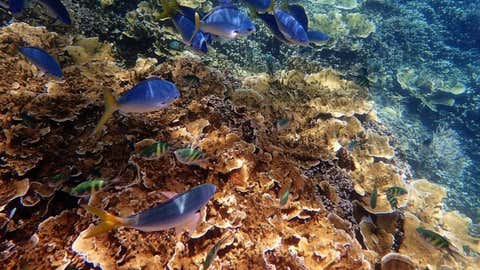 The Great Barrier Reef.(IANS)