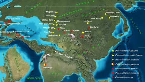 Distribution and migration of Paraceratherium in the Oligocene Eurasia. Localities of the early Oligocene species were marked by the yellow colour and red indicates the late Oligocene species. (IVPP)