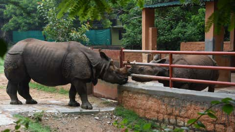 The inmates of Mysuru Zoo enjoy the cool breeze and light drizzle. (S R Madhusudhan/BCCL, Mysuru)