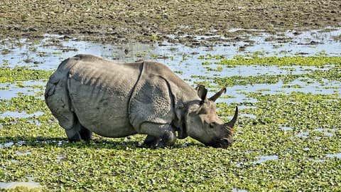 A rhinoceros. (IANS)
