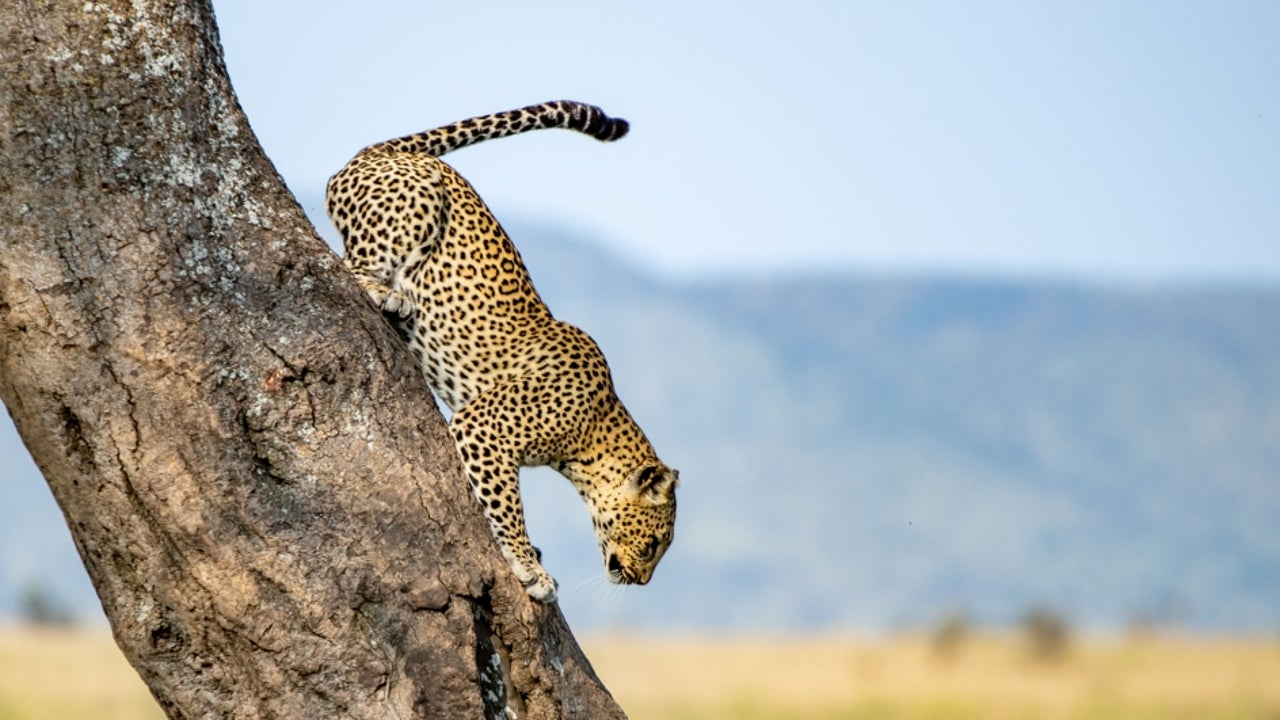 A mind-boggling collection of photos from the depths of Serengeti National Park in Tanzania, East Africa.