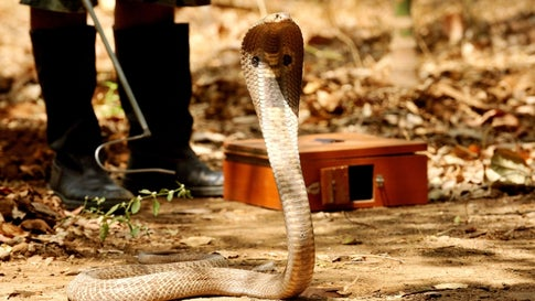 Cold Weather Causes Snakes to Invade Gurugram's Residential Societies