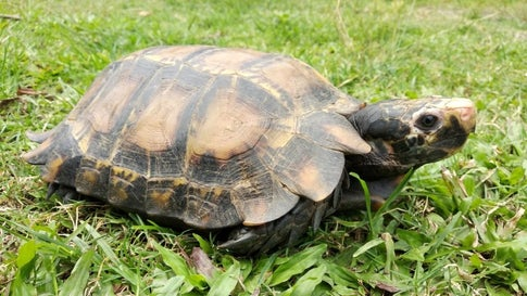 'Impressive' Tortoise Species Found In India for First Time
