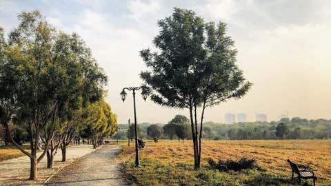 Representative Image of a Tree. (IANS)