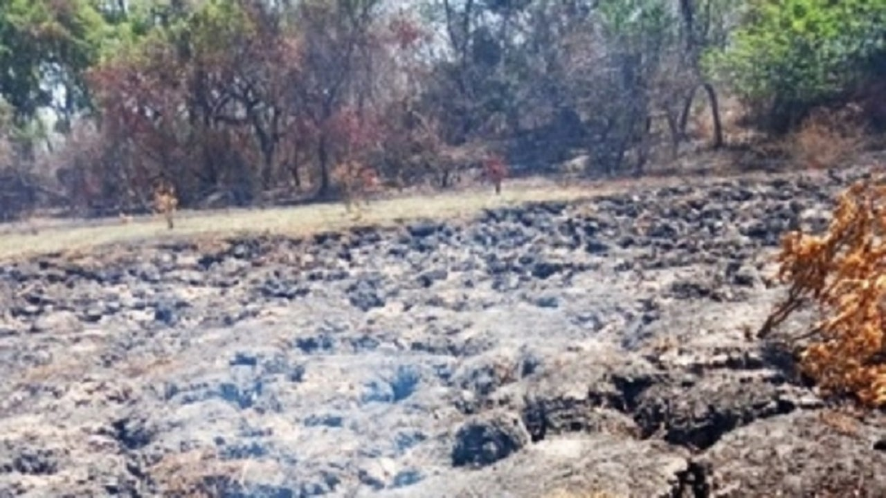 Underground fires were observed in the forest ranges of Lakhimpur Kheri district in Uttar Pradesh.