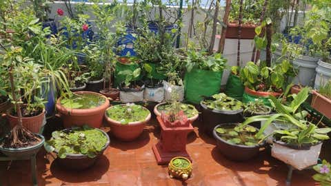 """A terrace gardener in Bengaluru says, """"Whenever I need fresh air or want to just sit among greens and close my eyes, I have a place in my garden."""" (Ashwini Gajendran)"""