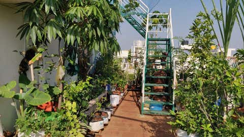 """A terrace gardener in Bengaluru says, """"Spending more time in the sun and fresh air has helped my health. In my garden, I get to connect with myself."""" (Ashwini Gajendran)"""