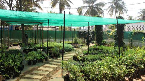 """The founder of a gardening social enterprise in Bengaluru says, """"It's rewarding being able to harvest your own produce. It is a satisfying and therapeutic experience and a life-changing activity."""" (Amruth Kiran / IIHS)"""