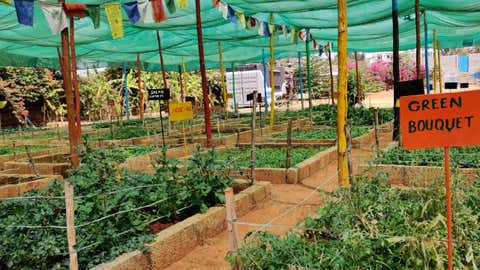 """The founder of a community-farming initiative says, """"Being able to be connected to nature, to understand ecosystems, to understand where our food comes from, and how it grows and what we consume"""" (Prathigna Poonacha / IIHS)"""