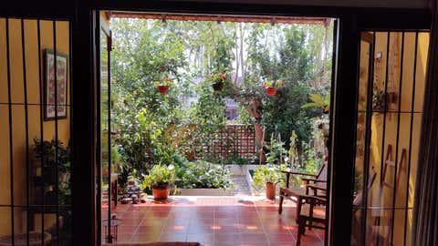 A home garden in Bengaluru (Prathigna Poonacha / IIHS)