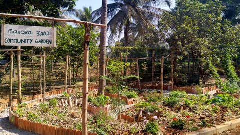 """The co-founder of a permaculture-based design company that started a community gardening initiative besides Jakkur lake in Bengaluru says, """"This space was created for biodiversity, water harvesting, bringing joy to people. The people who come together to work on the garden as a community, share stories, engage with each other and interact."""" (Ananas, Bengaluru)"""