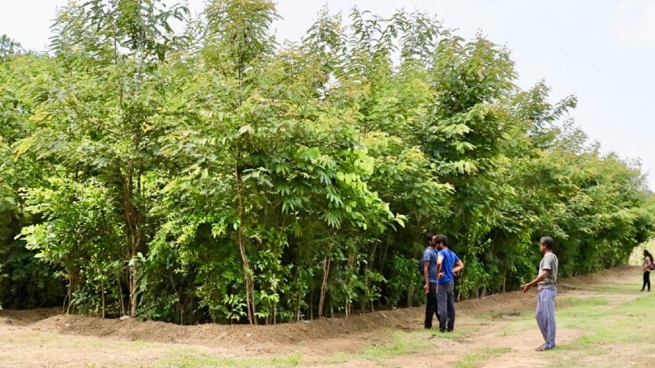 Mumbai Gets its First Manmade Dense Forest