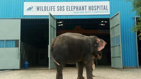 India's first elephant hospital. (Wildlife SOS)
