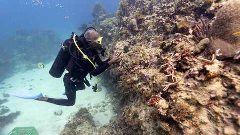 Jamaica's Coral Reefs Make Remarkable Recovery