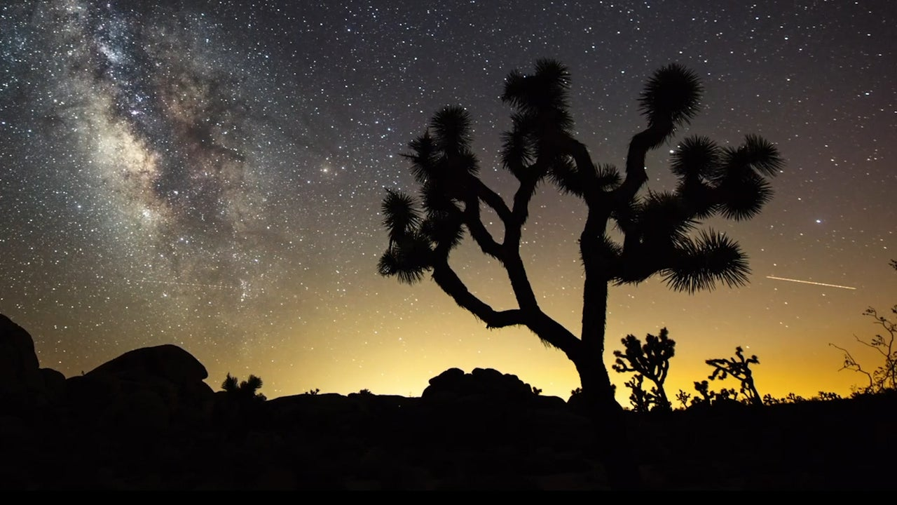 A new study finds climate change could decimate the Southwest's iconic Joshua trees.