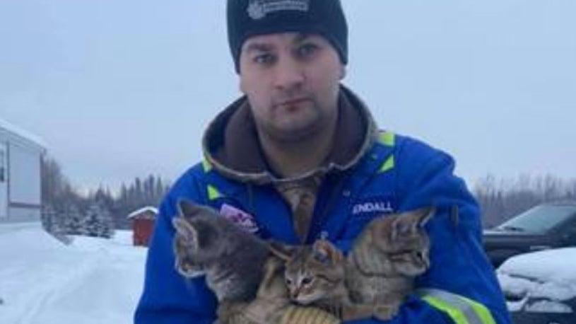 Canadian Oil Worker Saves 3 Frozen Kittens Using Coffee