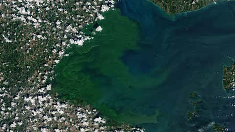 This past July, a severe bloom of blue-green algae began spreading across the western half of Lake Erie. It eventually grew to 620 square miles. (NASA Earth Observatory image by Joshua Stevens, using Landsat data from the U.S. Geological Survey)