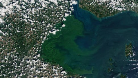 Dangerous Lake Erie Algal Bloom Is Now Eight Times the Size of Cleveland