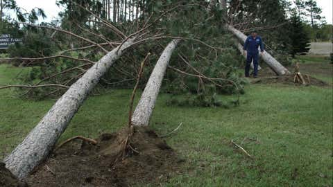 9/22/2005 Andover, MN.-- tornado or straight line winds took trees down and tipped some over at the Anoka County Parks and Maintenace buildings on Bunker Lake Blvd. Dan Alleman a mechanic at the Parks Dept. was in the yards on Thursday morning to see the damage. (Photo by STORMI GREENER/Star Tribune via Getty Images)