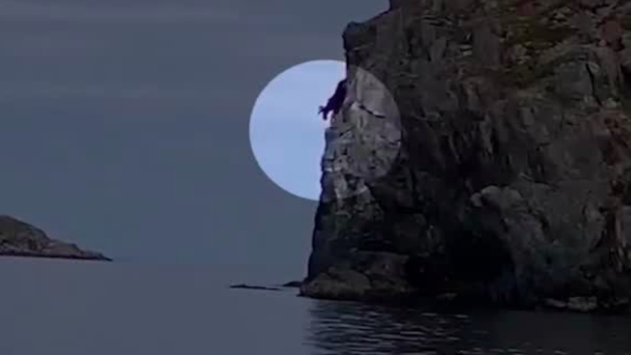 Newfoundland Moose Takes a Dive off Rocky Cliff