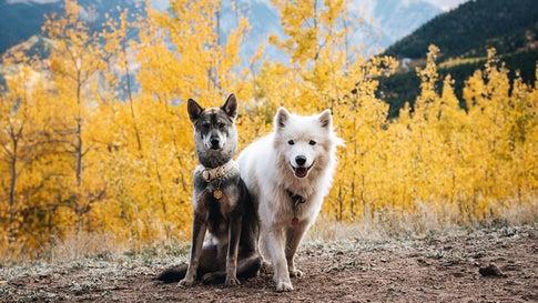 The Northern Wild Duo of Colorado (PHOTOS)