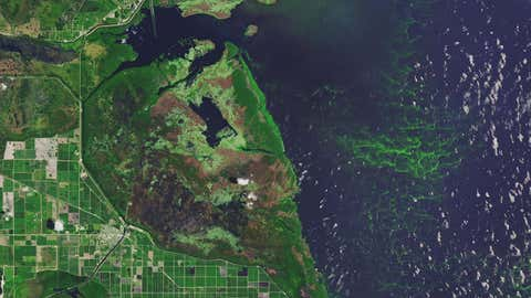 Lake Okeechobee routinely faces algae blooms. Toxic blooms in Florida resulted in states of emergency being declared in 2016 and 2018. (NASA Earth Observatory image made by Joshua Stevens, using Landsat data from the U.S. Geological Survey)